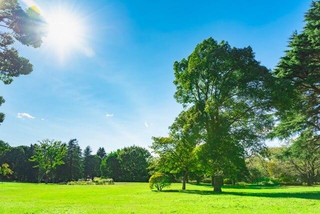 夏の日差しの公園