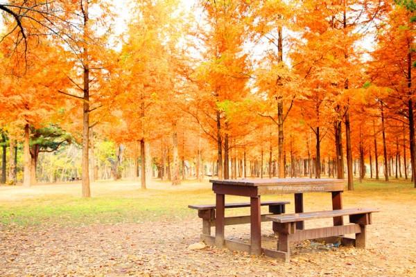 紅葉の公園とベンチ